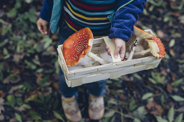 Germany, Saxony, boy holding basket with fly agarics