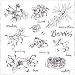 Vector illustration of berries for design menus, recipes and pac