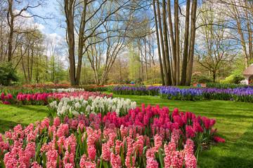 Fototapete - Idyllic Landscape with Spring Flowers in Keukenhof Garden, Netherlands