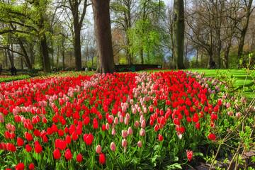 Fototapete - Tulips Garden Keukenhof, Lisse, Netherlands