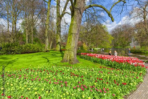 Fototapete Scenic of Keukenhof Tulips Garden, Lisse, Netherlands.