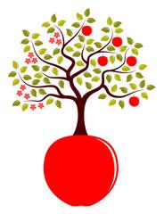 apple tree in two seasons growing from apple