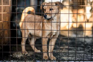 photo of an abandoned dog