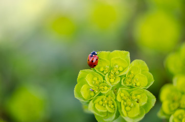 ladybug in a green plant