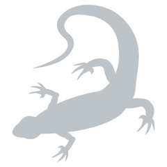 Stylized icon of a colored lizard on a white background