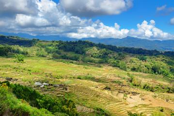 Green rice field  in Tana Toraja