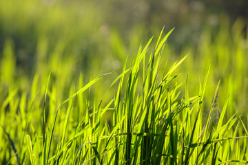 grass on forest glade closeup in sun light