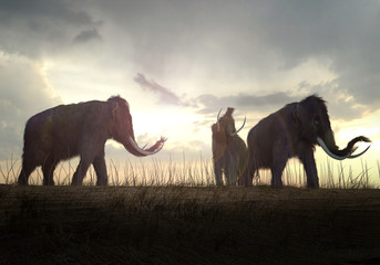 Woolly Mammoths In The Sunset Wall mural