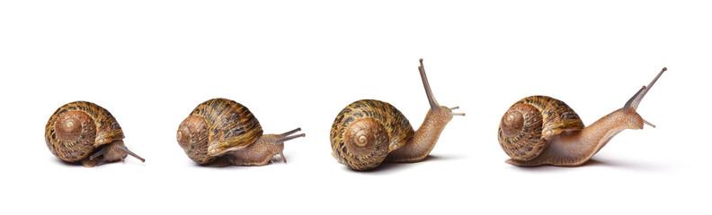 Set of snails isolated on white background Wall mural