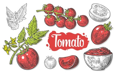 Set of hand drawn tomatoes isolated on white background. Tomato, half and slice isolated engraved vector illustration.