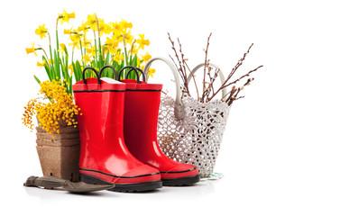 Spring flower yellow narcissus garden still life