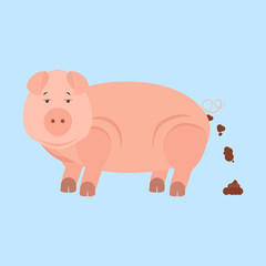 Pig shitting. Pig pooping. Isolated. Blue background.