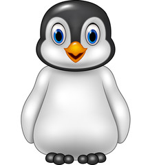 Cute baby penguin posing isolated on white background