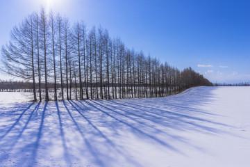 北の大地の雪景色