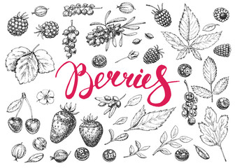 Hand drawn vector berries