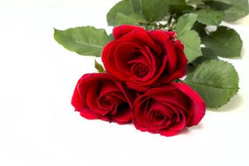 Kırmızı Güller Beyaz Fonda