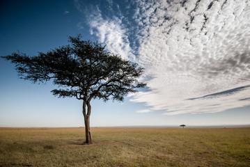 Amazing sky in the Masai Mara in Kenya