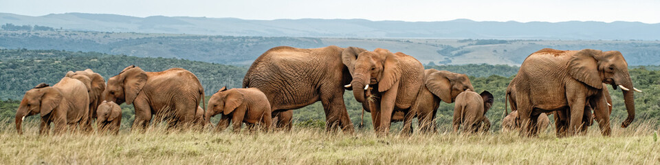 Photo sur Aluminium Elephant Elephant Herd