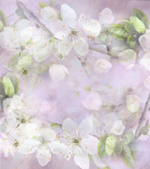 Light background with white flowers and green leave on a tree branch.