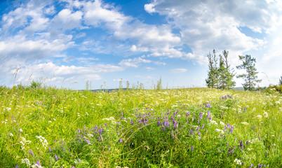 spring flowers field