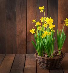 Flowers on a dark wooden background