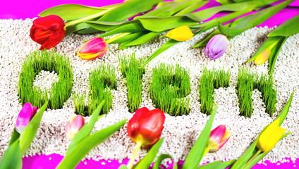 Ostergras und Tulpen, Ostern