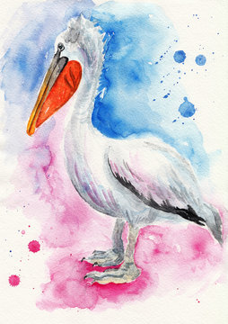 Pelican. Watercolor illustration on textured paper