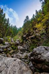 coniferous forest on a  rocky hillseide of mountain