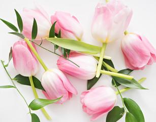 fresh spring pink tulips on white background