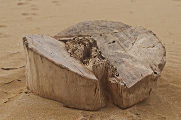 tronco en la arena