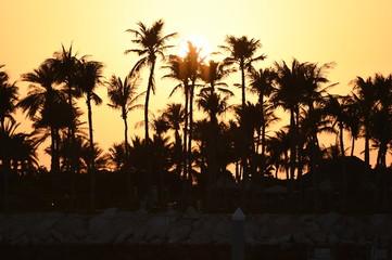 Oasi di palme