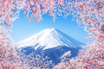 Wall Mural - Fujiyama in Japan zur Kirschblüte