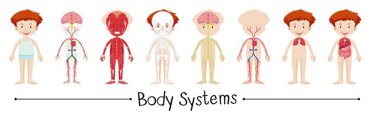 Body system of boy