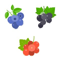 Berry vector set, blueberry, blackcurrant, red berry, flat design