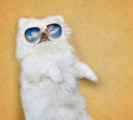 Dog wearing sunglasses relaxing on the sea sand.
