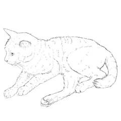 Vector Sketch Single Cat