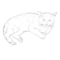 Vector Sketch Single Cat