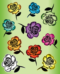 colored roses design vector illustration