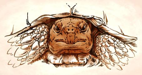 engrave ink draw turtle illustration