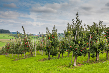 Set of apples on Lake Constance Germany