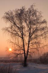 beautiful tree silhouette on orange sunset