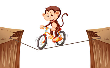 Monkey riding bike on the rope