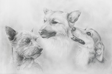 Dogs pencil drawing on old paper, Dogs portrait. Dog portrait.