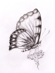 Butterfly with flower. Original hand draw. White background.