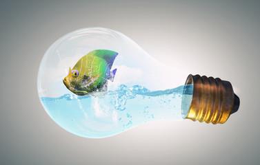Exotic fish in bulb