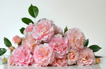 Bunch of pink garden roses. Bouquet of pink roses on a white background.