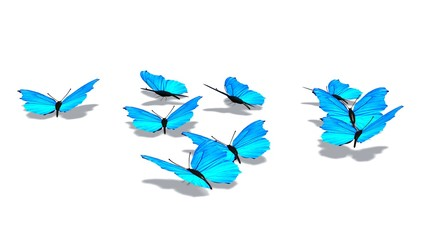 Blue butterflies isolated on white background