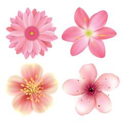Realistic beautiful pink flowers illustration set
