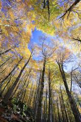 I magnifici colori del bosco