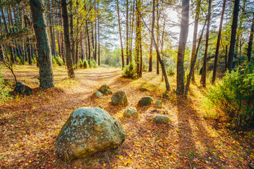 Boulders from the Ice Age in beautiful wild autumn forest